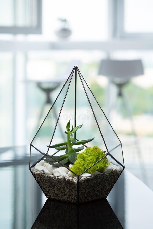 在一个现代公寓或办公室内部的一棵美丽的植物 绿色室内装璜 免版税库存图片