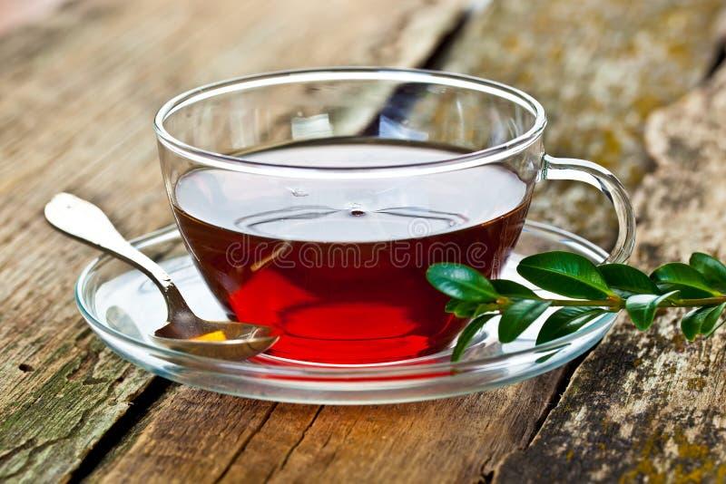 在一个玻璃杯子的茶 免版税库存图片