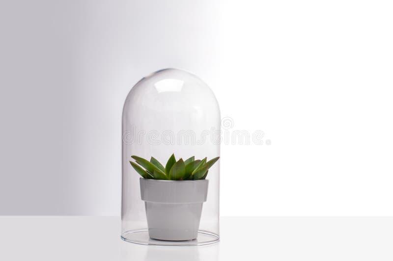在一个玻璃玻璃容器里面的多汁室内植物 免版税库存照片