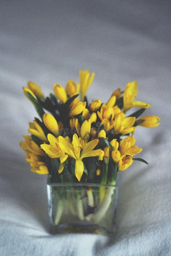 在一个玻璃瓶子的小开花的黄水仙 库存图片