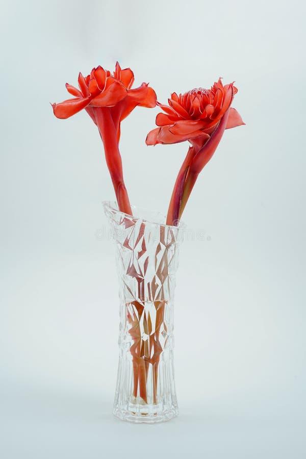 在一个玻璃瓶子的红色火炬姜 免版税库存图片