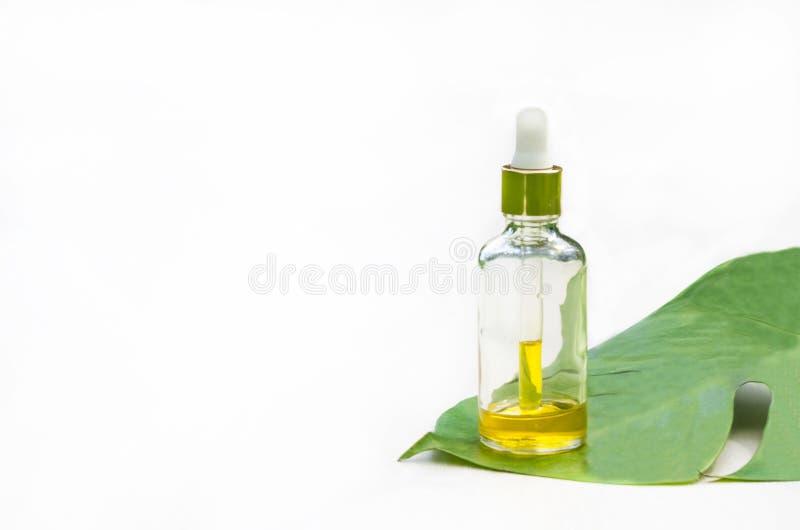在一个玻璃瓶的天然化妆品产品 有机萃取物,血清,皮肤护理的根本按摩油在一片绿色叶子 库存图片