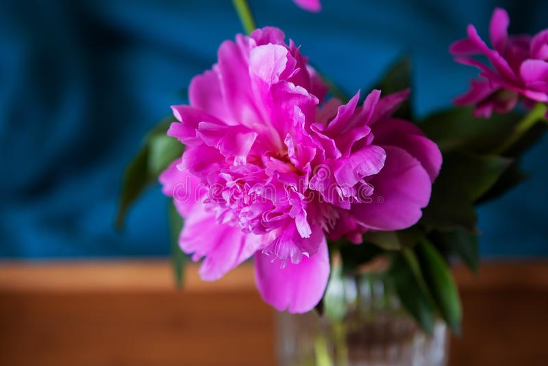在一个玻璃花瓶的美丽的桃红色牡丹在一个木盘子在床上站立 r 图库摄影