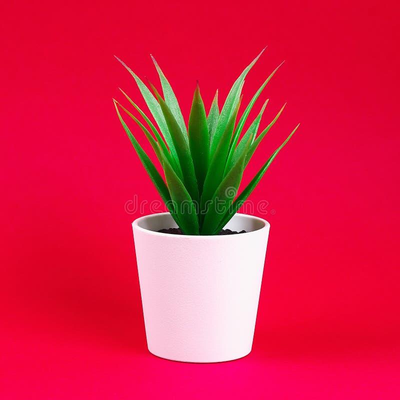 在一个白色小罐的人为绿草在红色伯根地背景 免版税库存照片