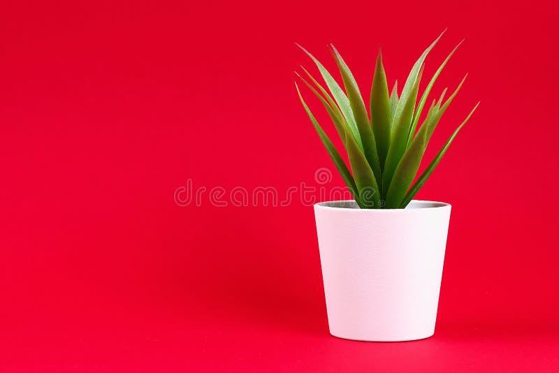 在一个白色小罐的人为绿草在红色伯根地背景 免版税图库摄影