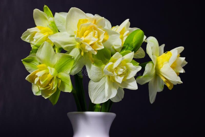 在一个白色花瓶的新鲜的春天黄水仙在黑暗的背景 库存照片