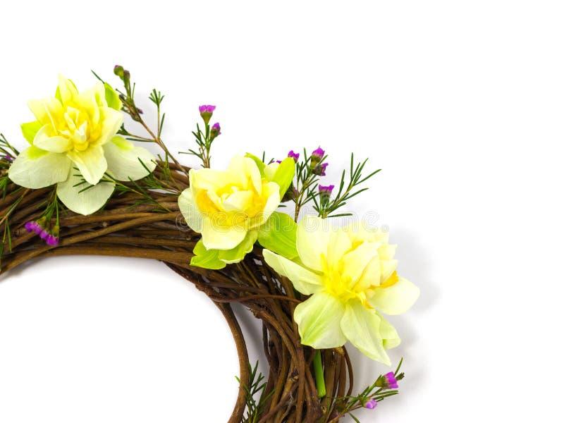 在一个白色花瓶的新鲜的春天黄水仙在黑暗的背景 库存图片