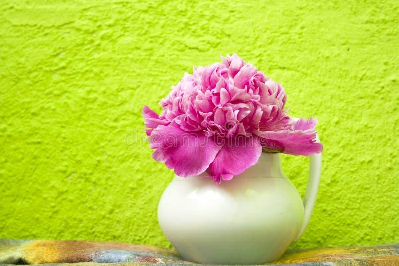 在一个白色花瓶的桃红色牡丹 库存图片