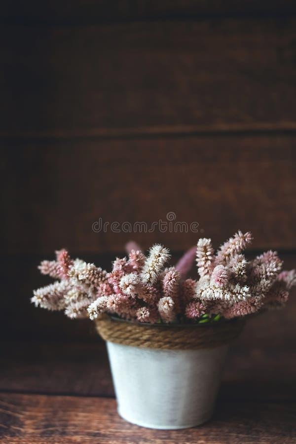 在一个白色花瓶的美丽的紫色夏天花 免版税库存图片