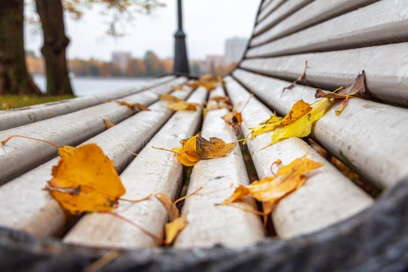 在一个白色长木凳的叶子 免版税库存图片