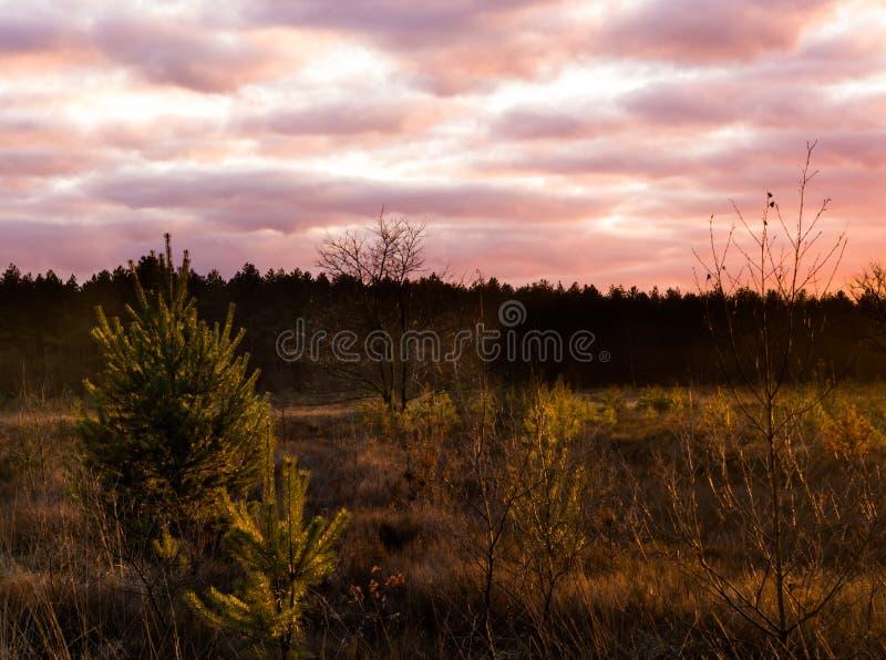 在一个石南花风景与真珠质云彩,在冬天很少发生的一种五颜六色的天气现象的日落 图库摄影