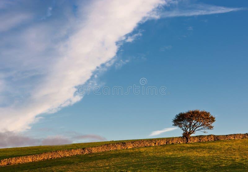 在一个石墙旁边的树 免版税库存照片