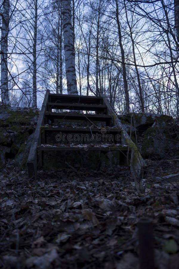 在一个石墙的老木楼梯,在一个森林里在北瑞典 桦树在背景中,在foregr的下落的叶子 库存图片