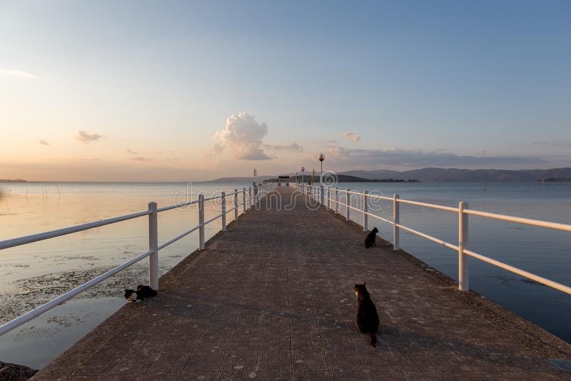 在一个码头的猫在有温暖的日落颜色的一个湖 免版税库存图片