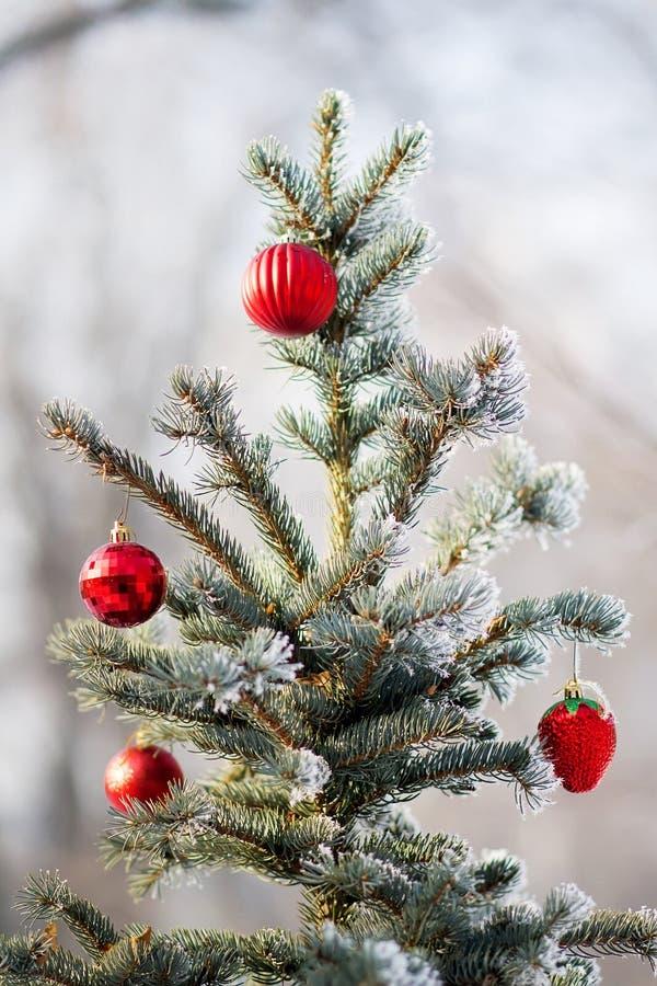 在一个积雪的树枝的红色圣诞节球 图库摄影