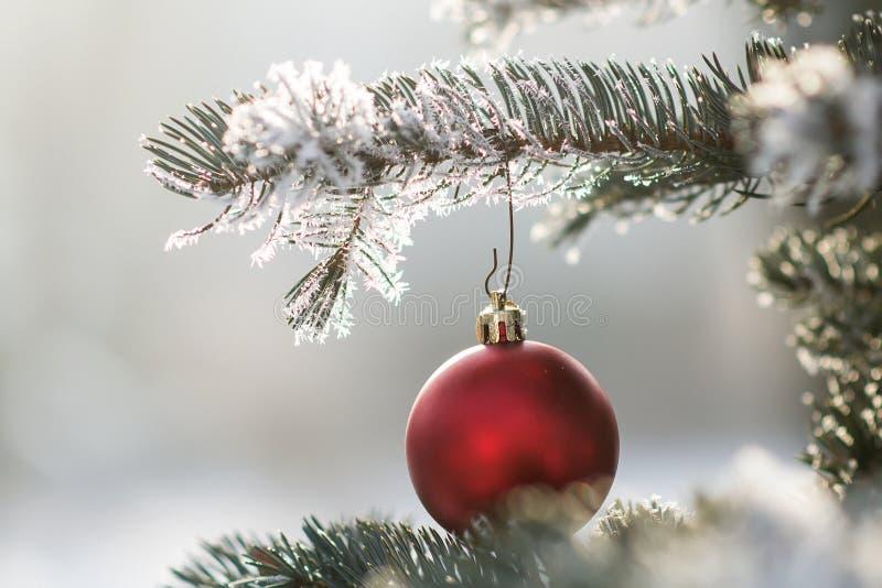 在一个积雪的树枝的红色圣诞节球 库存照片