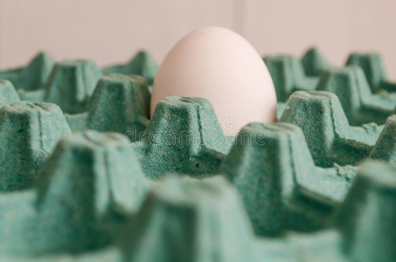 在一个空的绿色蛋纸盒的一个白鸡蛋在一张宏观侧视图 图库摄影