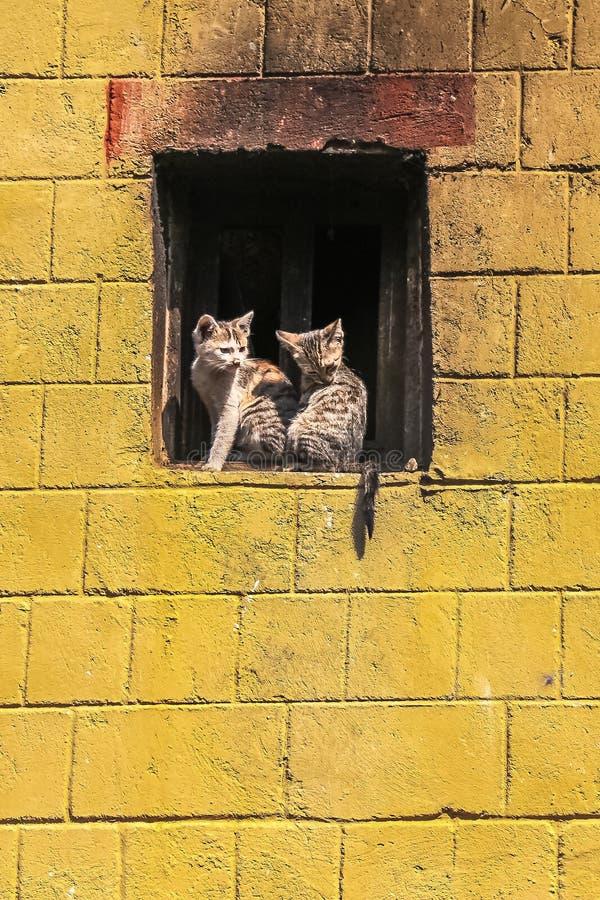 在一个窗口壁架的两只小猫在老镇原阳县,云南,中国 免版税库存照片