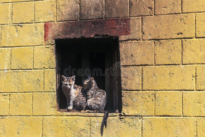 在一个窗口壁架的两只小猫在老镇原阳县,云南,中国 库存照片