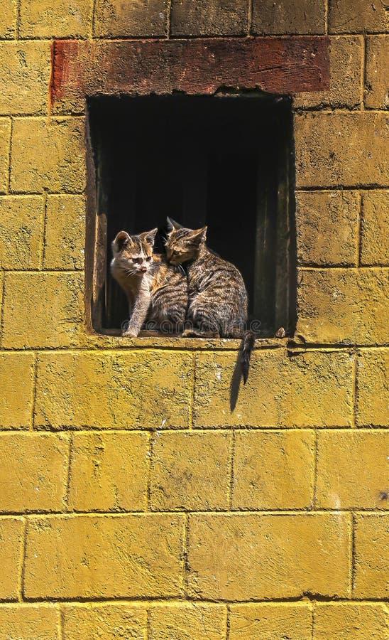 在一个窗口壁架的两只小猫在老镇原阳县,云南,中国 库存图片