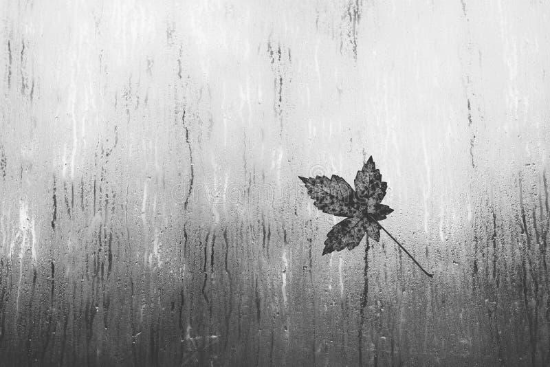在一个窗口的叶子在雨中 库存照片