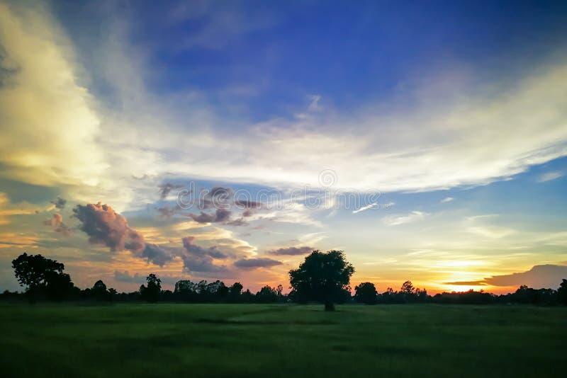 在一个简单的野草领域和一个森林的美好的日落风景背景的 库存图片