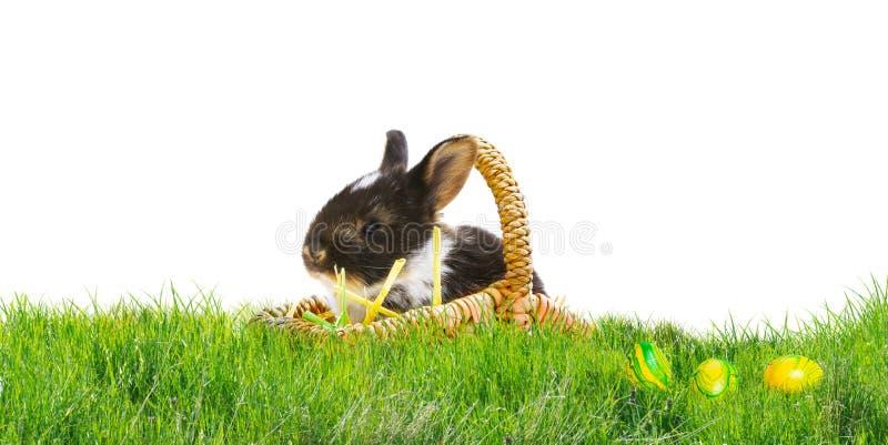 在一个篮子的复活节兔子在草坪,复活节彩蛋 图库摄影