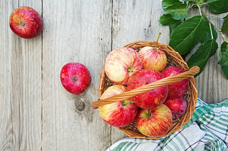 在一个篮子的新鲜的红色苹果在一张桌上在一个夏天从事园艺 免版税库存照片