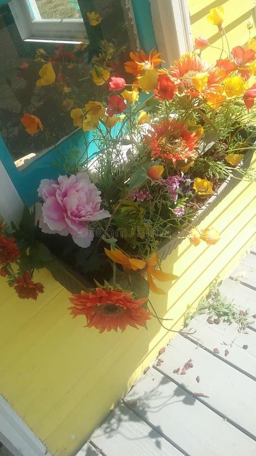在一个篮子的花由在一个黄色房子的窗口 库存照片