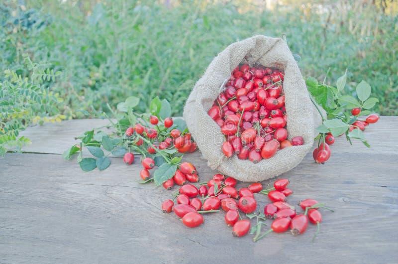 在一个粗麻布袋的玫瑰果果子在木背景 库存图片
