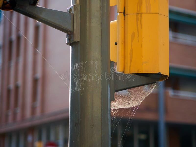 在一个红绿灯的大蜘蛛网在市区中间 库存照片