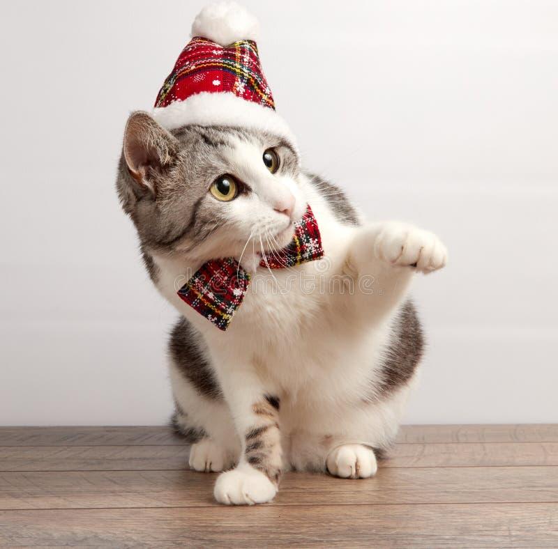 在一个红色圣诞节帽子和蝶形领结的猫 免版税库存照片