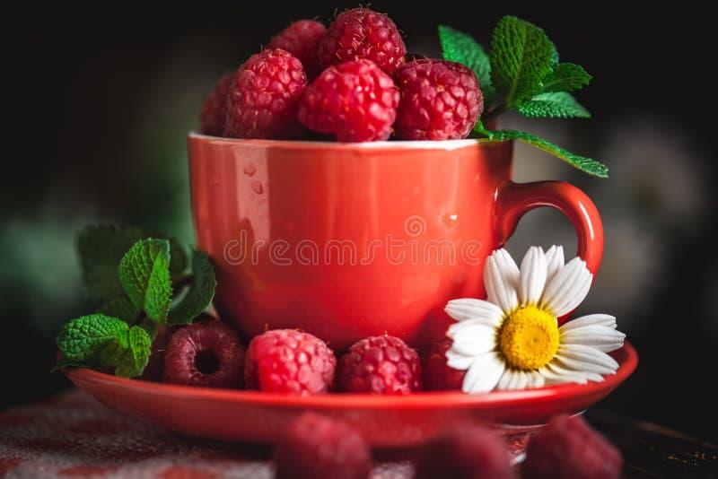 在一个红色杯子的莓有春黄菊和叶子的在黑暗的背景 夏天和健康食品概念 r 免版税库存照片