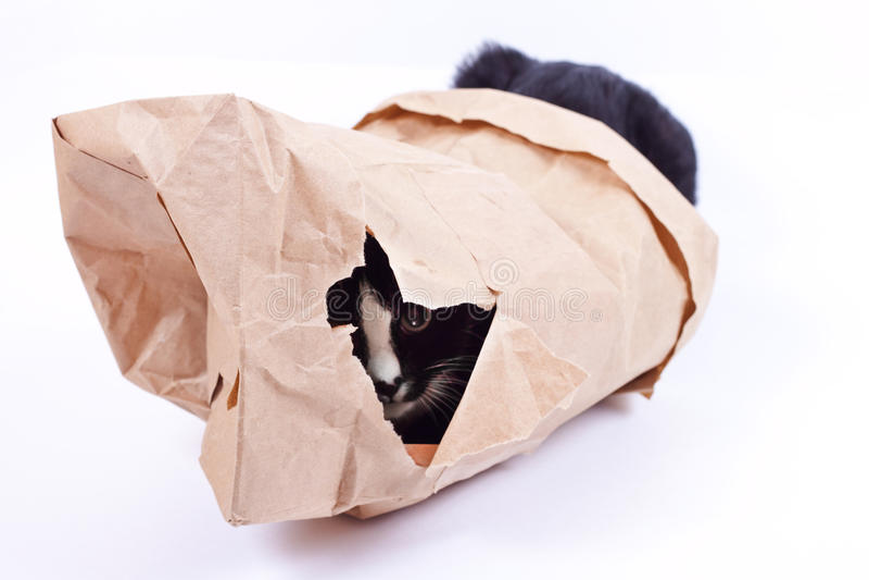 在一个纸袋的恶意嘘声 图库摄影