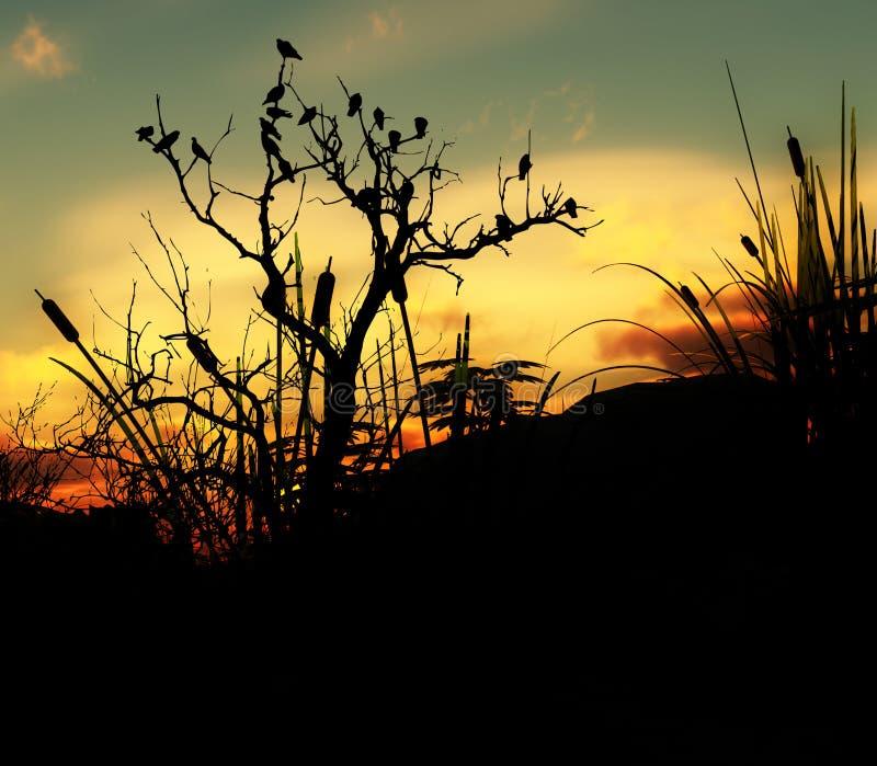 在一个结构树的鸟有天空背景4 库存照片