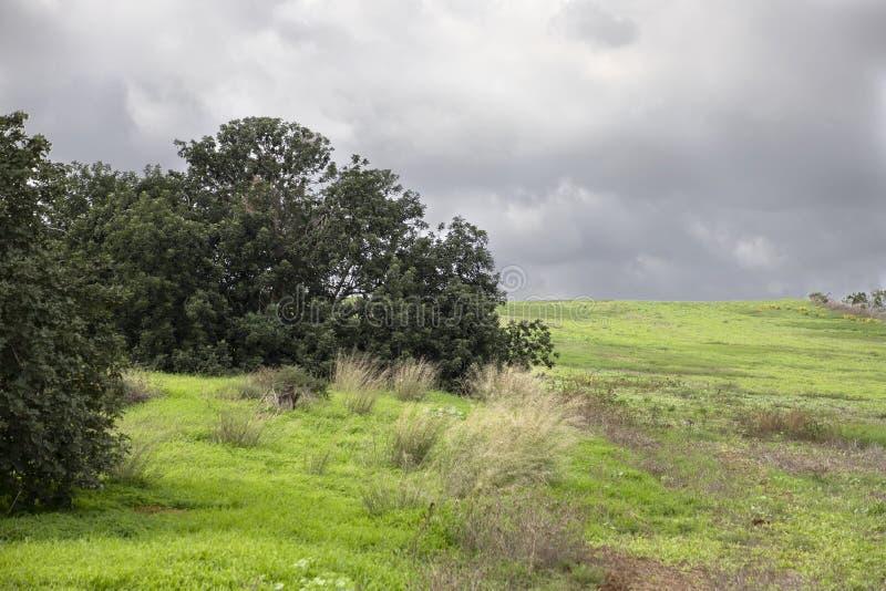 在一个绿色农业领域边缘的树在云彩的风雨如磐的天空下 免版税库存图片
