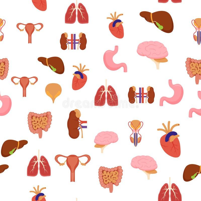 在一个绿色医学解剖学平的样式设计的动画片人的内脏背景样式网的 向量例证
