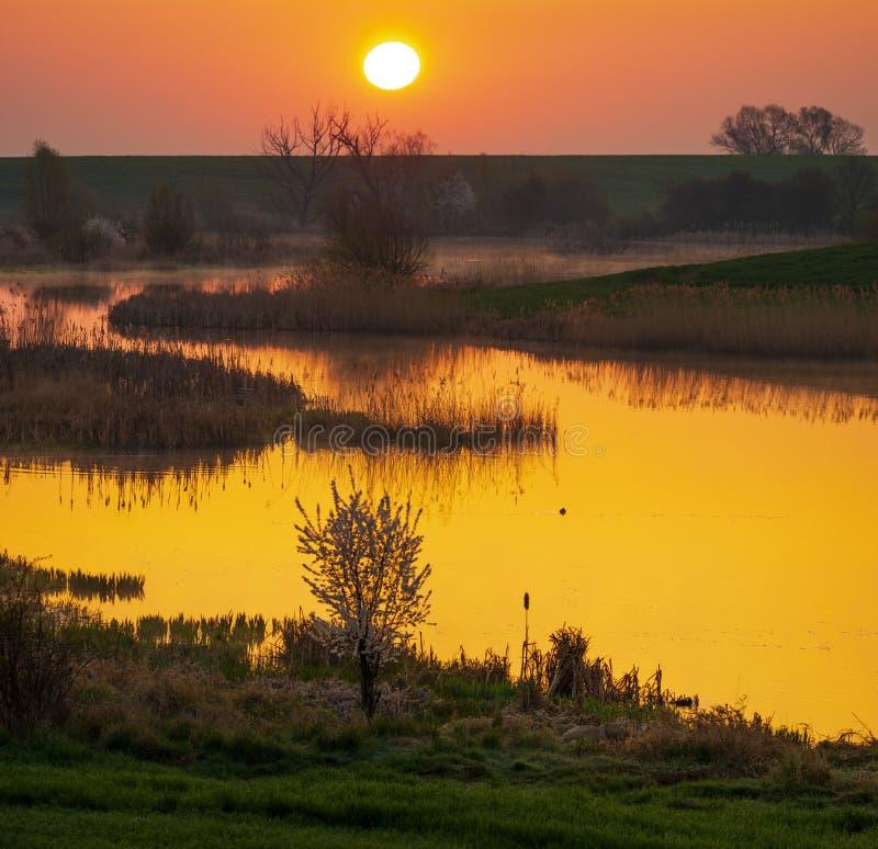 在一个绿色春天领域的日出由湖 免版税库存照片