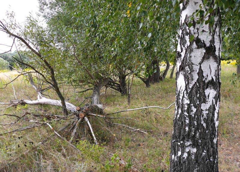 在一个绿色草甸的干燥断枝 免版税库存图片