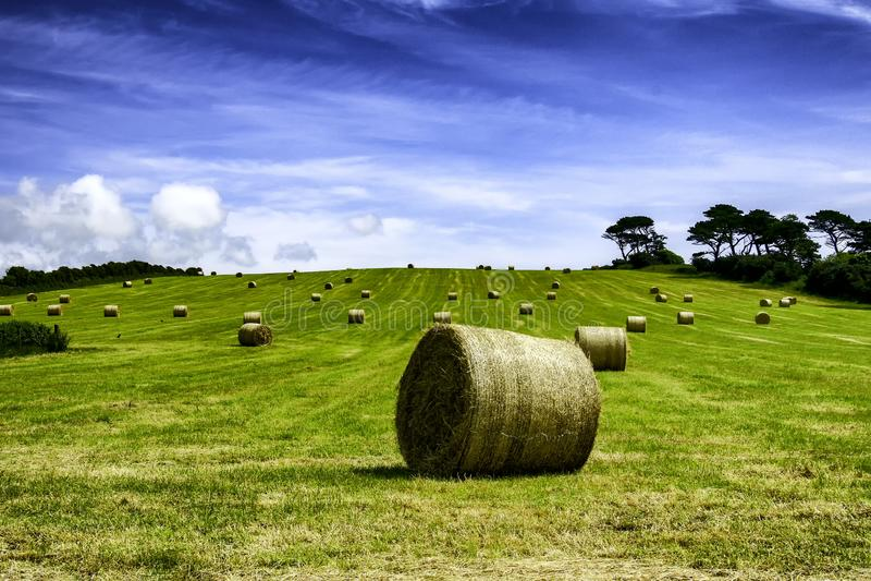 在一个绿色领域的干草捆在天空蔚蓝下 免版税图库摄影
