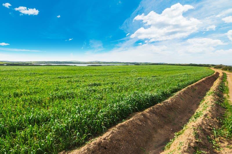 在一个绿色领域的犁沟在撒丁岛 免版税库存照片