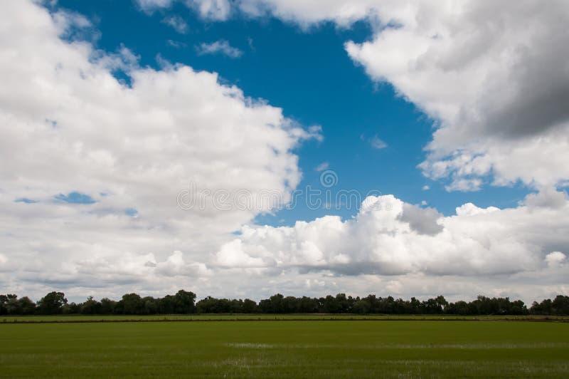 在一个绿色领域的非常多云天空 免版税库存图片