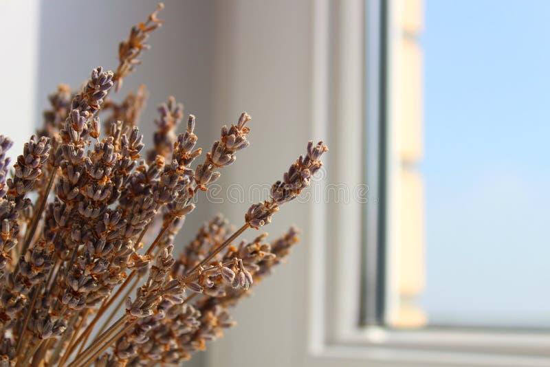 在一个罐的淡紫色在窗台,夏日,特写镜头 免版税库存照片
