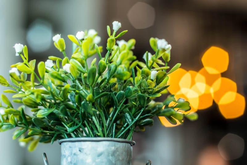 在一个罐的白色塑料花有五边形bokeh的 免版税库存照片