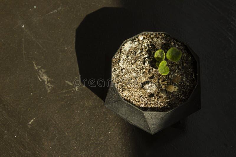 在一个罐的花在一张木桌上 免版税库存照片