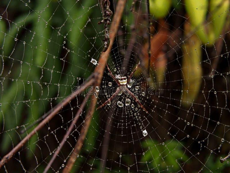 在一个网的蜘蛛在费沙尔小山,雪兰莪,马来西亚 免版税库存图片