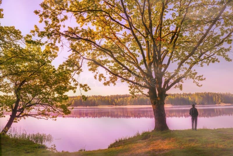 在一个美丽的湖的清早在森林 免版税库存照片