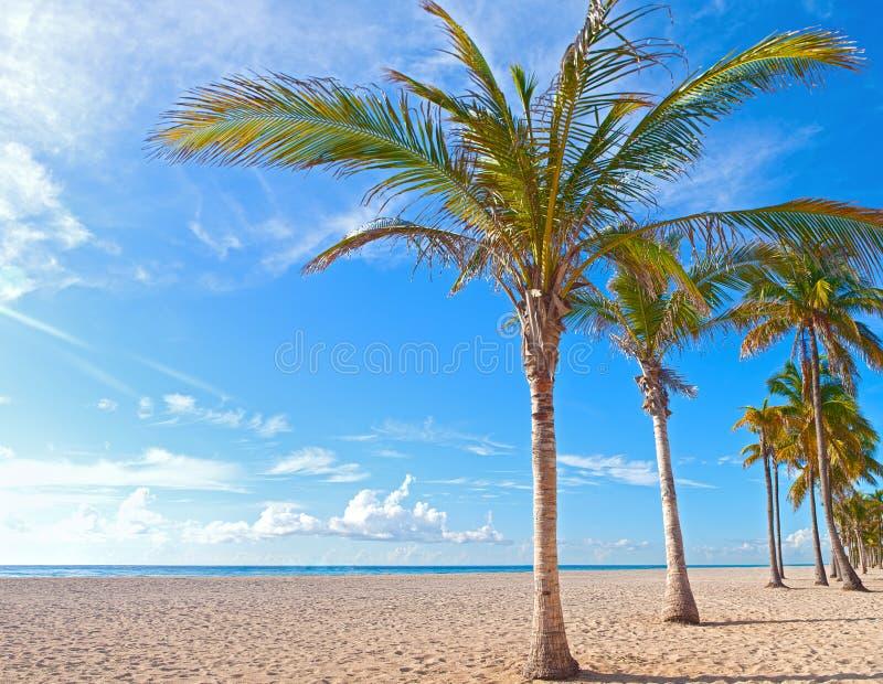 在一个美好的晴朗的夏天下午的棕榈树在好莱坞海滩 免版税库存照片