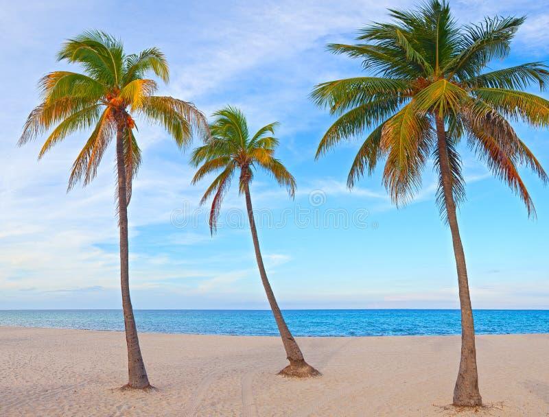 在一个美好的晴朗的夏天下午的棕榈树在迈阿密海滩 免版税库存照片