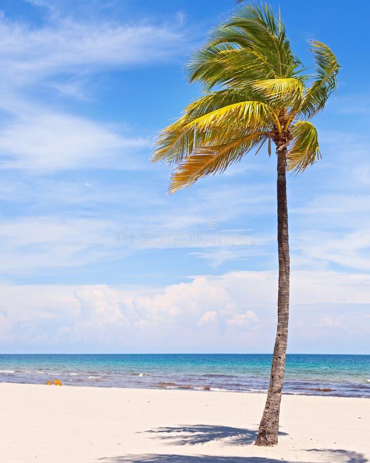 在一个美好的晴朗的夏天下午的棕榈树 免版税库存照片